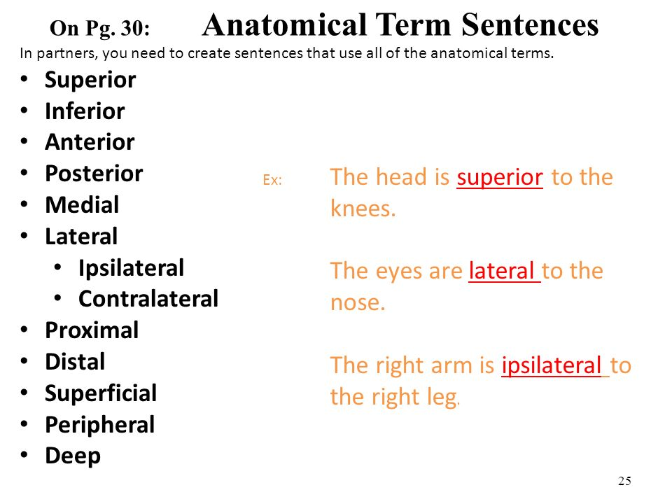 Ch 1 Anatomical Terminology Ppt Video Online Download