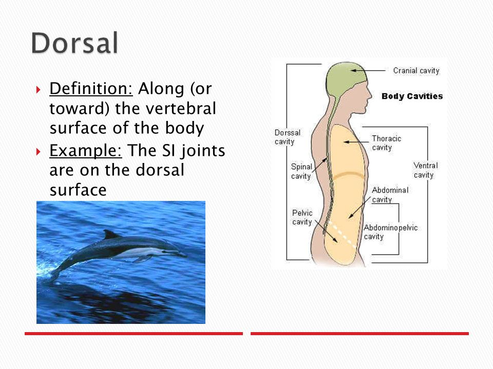 Anatomical Planes and Directions - ppt video online download