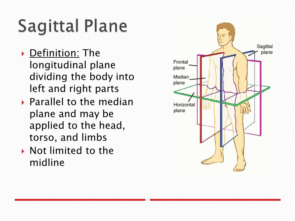 Anatomical Planes And Directions Ppt Video Online Download