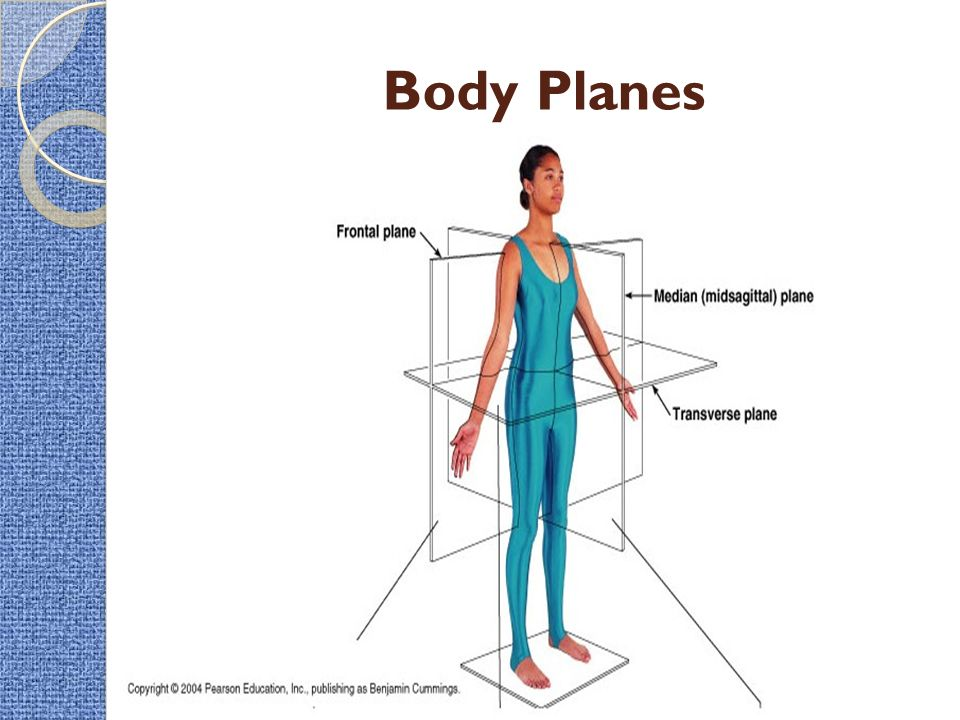 intro to the human body  u2013 directional terms  planes