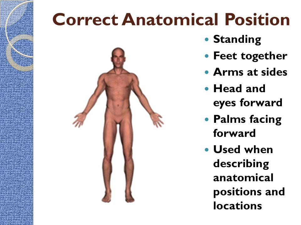 Intro To The Human Body Directional Terms Planes Quadrants And