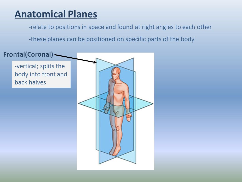 Anatomical Position Ppt Video Online Download