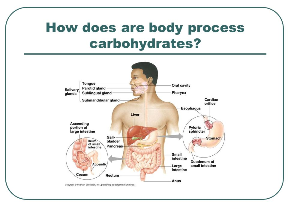 How does are body process carbohydrates