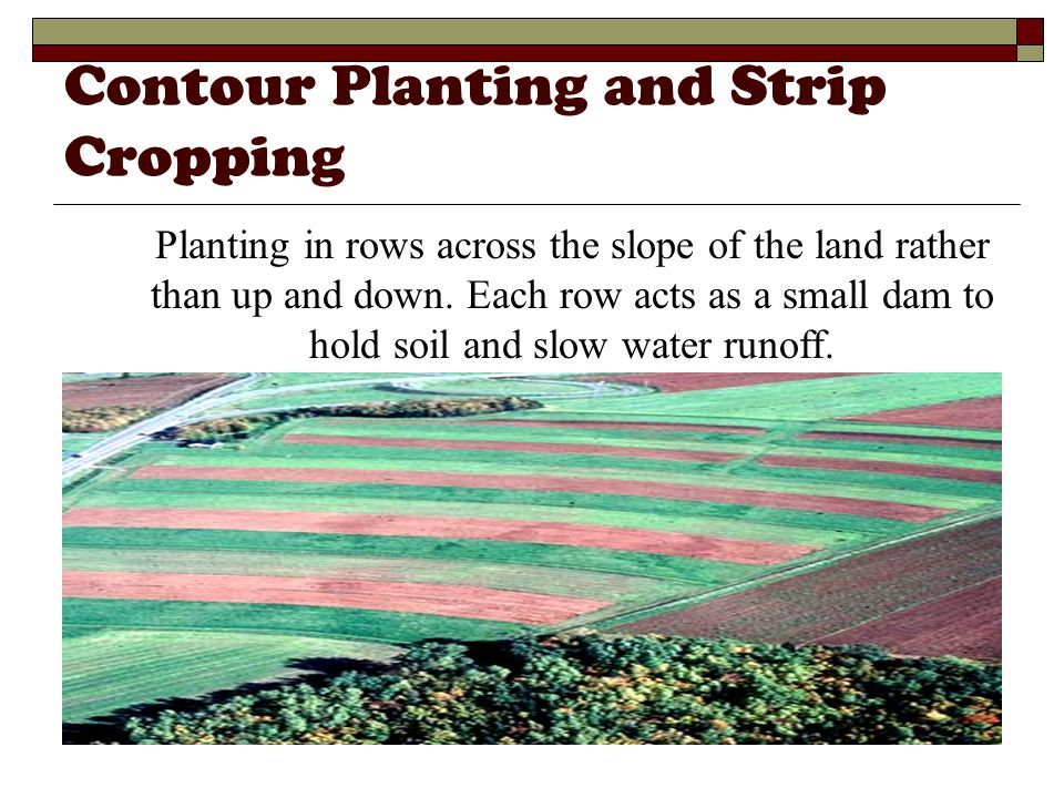 Contour Planting and Strip Cropping