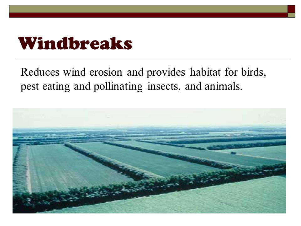 Windbreaks Reduces wind erosion and provides habitat for birds, pest eating and pollinating insects, and animals.
