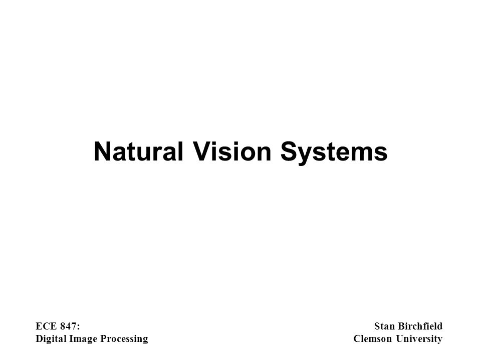 Natural Vision Systems - ppt download