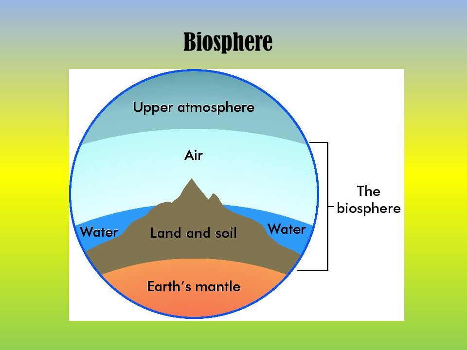 Ecology Is The Study Of The Interactions Between Living Things And