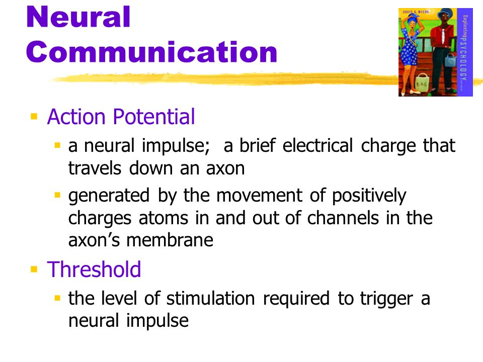 neural communication brochure Botulinum toxin comes in several forms, but they all destroy components of the docking apparatus (snap-25, synaptobrevin and syntaxin) that are required for vesicle fusion in neurons that utilize.