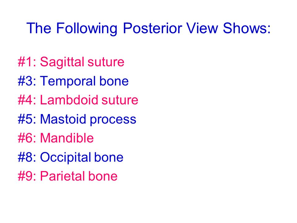 The Following Posterior View Shows: