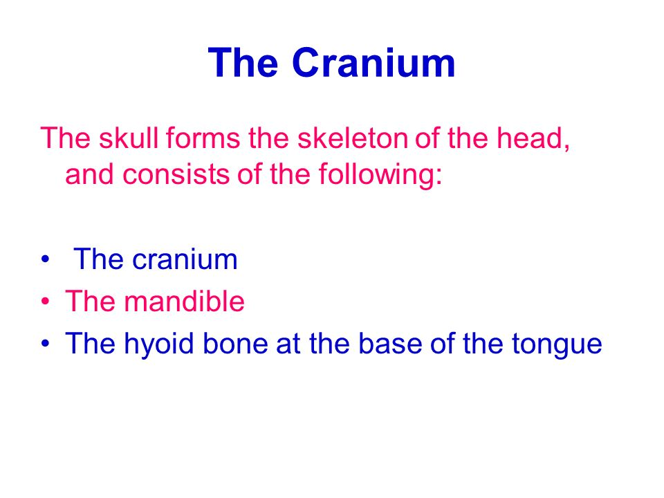 The Cranium The skull forms the skeleton of the head, and consists of the following: The cranium. The mandible.
