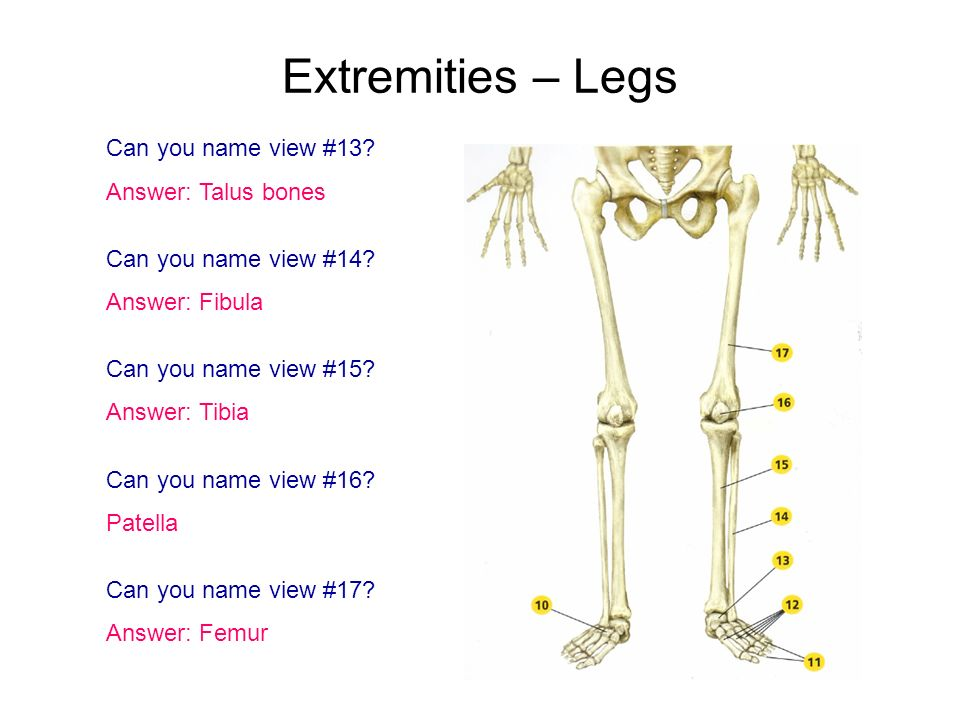 Extremities – Legs Can you name view #13 Answer: Talus bones