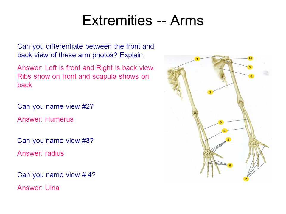 Extremities -- Arms Can you differentiate between the front and back view of these arm photos Explain.