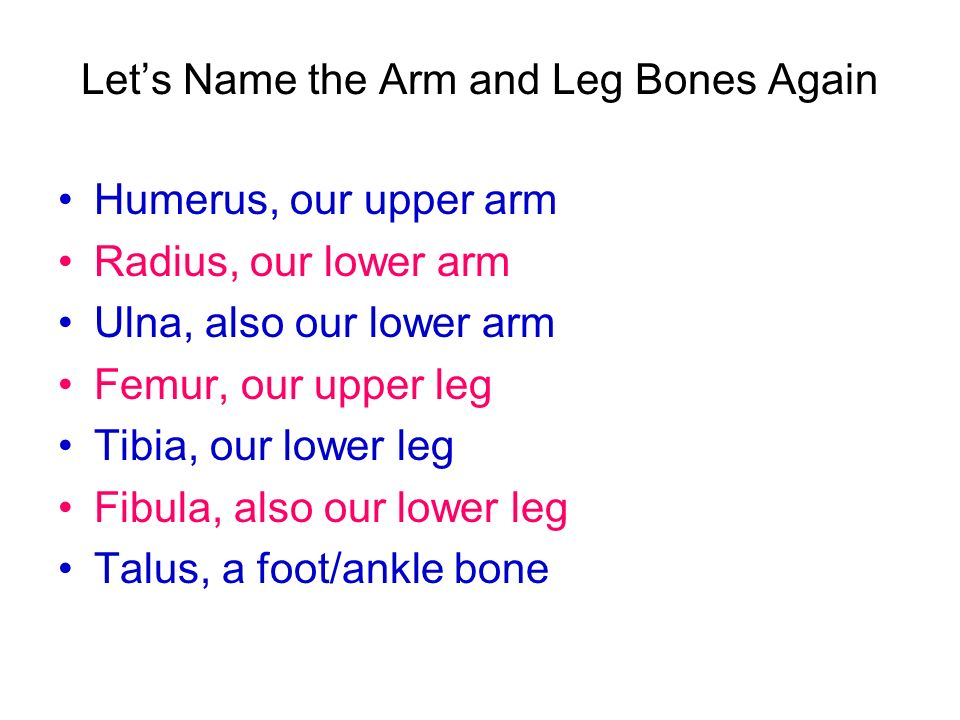 Let's Name the Arm and Leg Bones Again