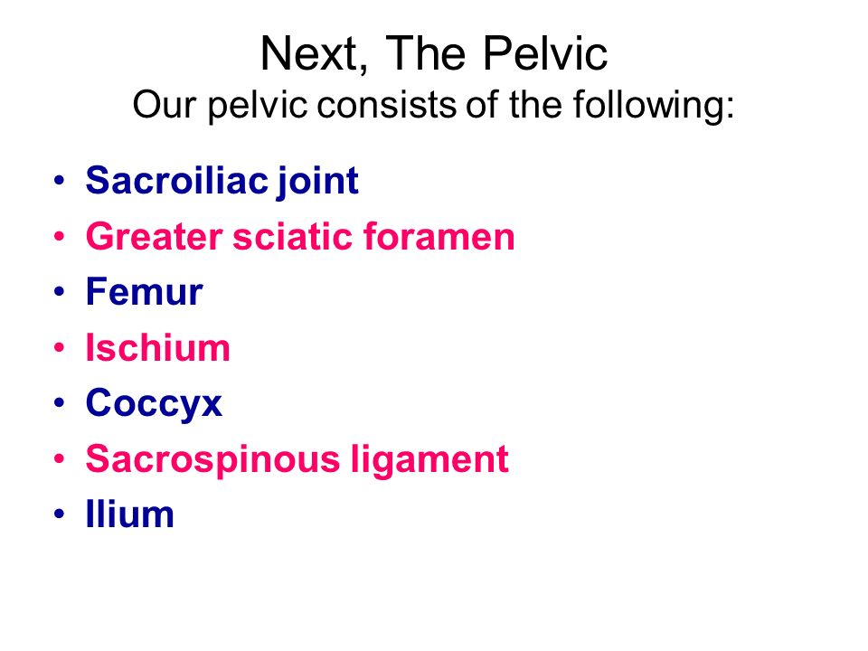 Next, The Pelvic Our pelvic consists of the following: