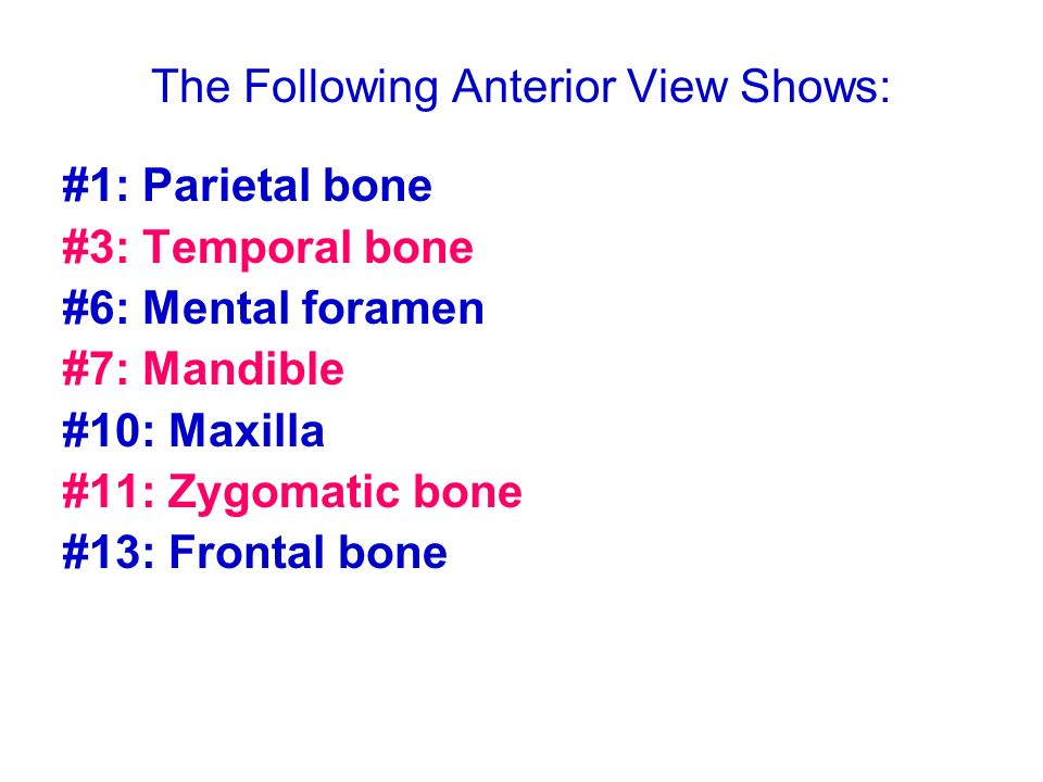 The Following Anterior View Shows: