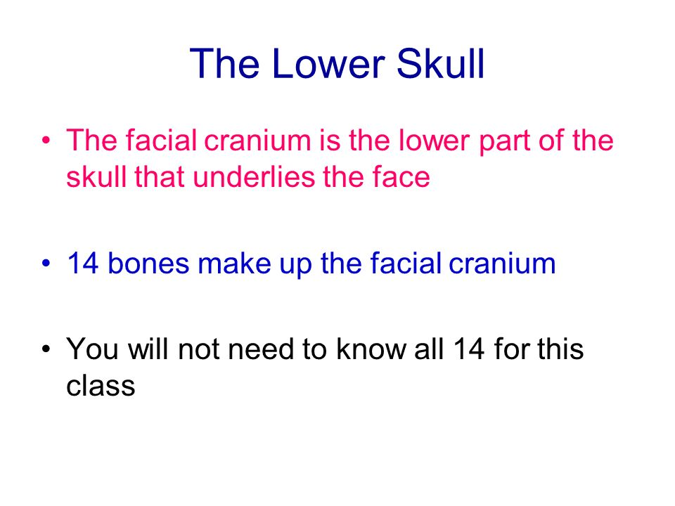 The Lower Skull The facial cranium is the lower part of the skull that underlies the face. 14 bones make up the facial cranium.
