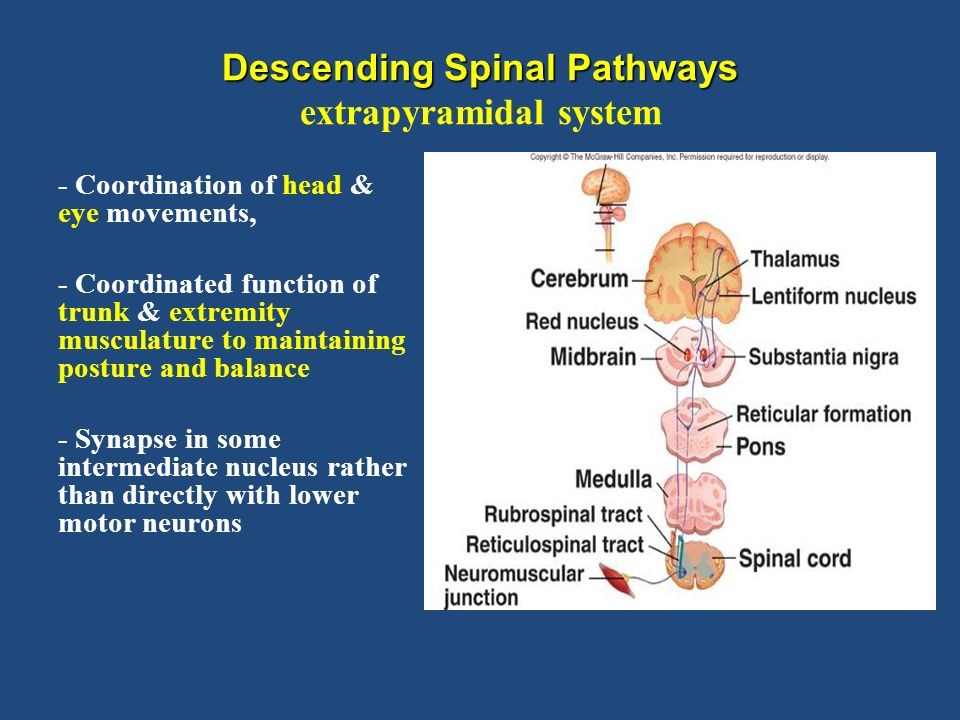 descending spinal pathways extrapyramidal system