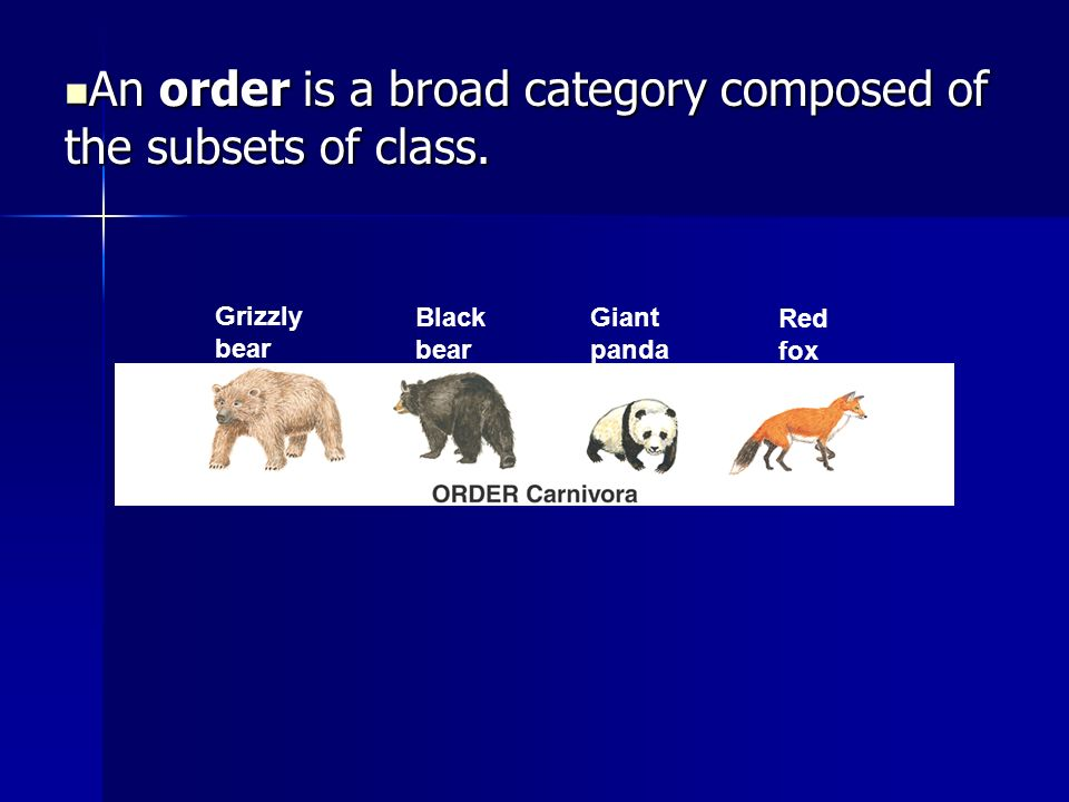 An order is a broad category composed of the subsets of class.