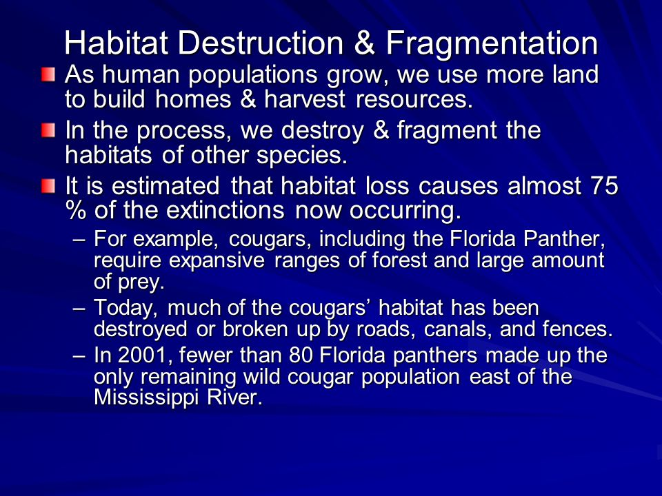 Habitat Destruction & Fragmentation