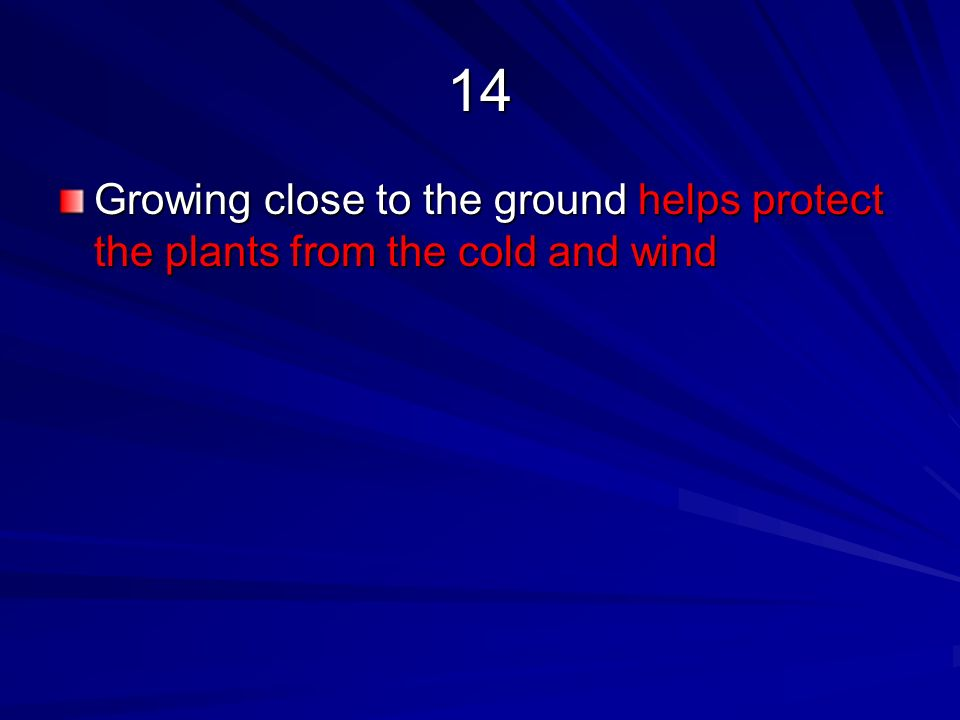 14 Growing close to the ground helps protect the plants from the cold and wind