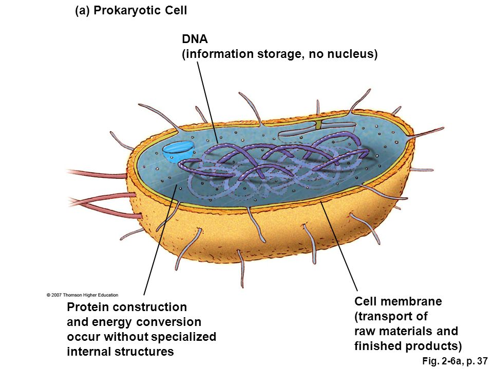DNA (information storage, no nucleus)