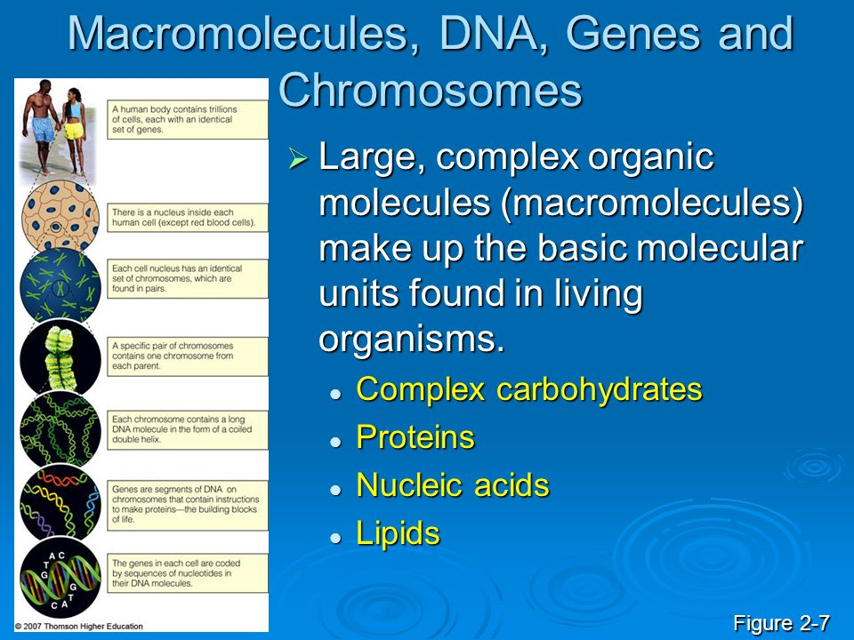 Macromolecules, DNA, Genes and Chromosomes