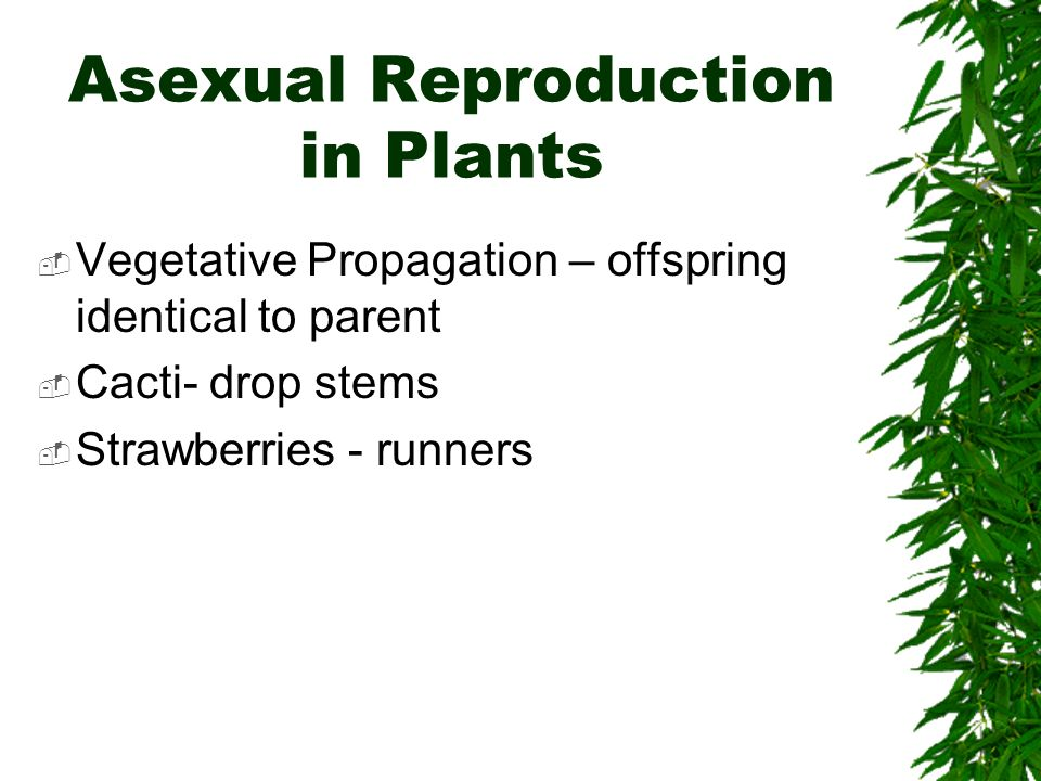 Cooksonia asexual reproduction regeneration
