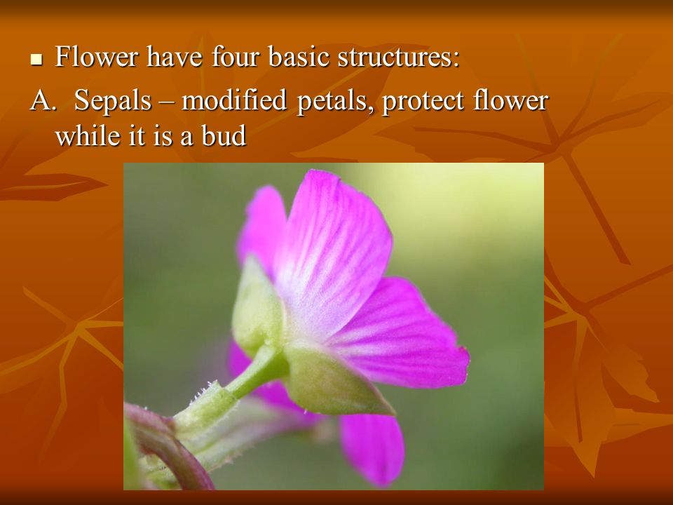 Flower have four basic structures: