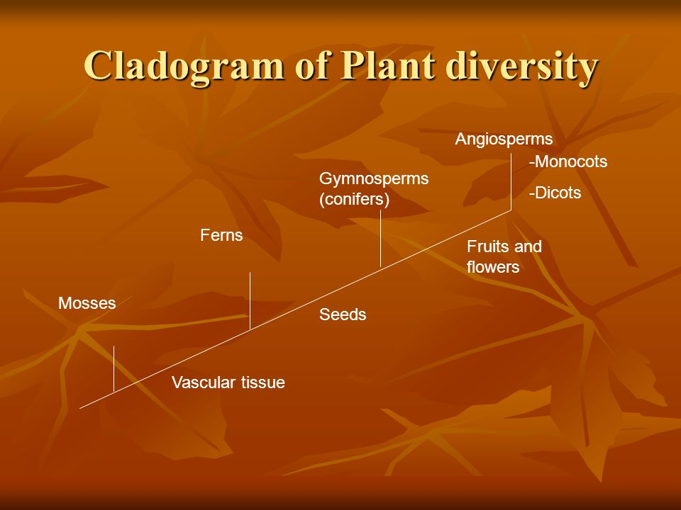 Cladogram of Plant diversity