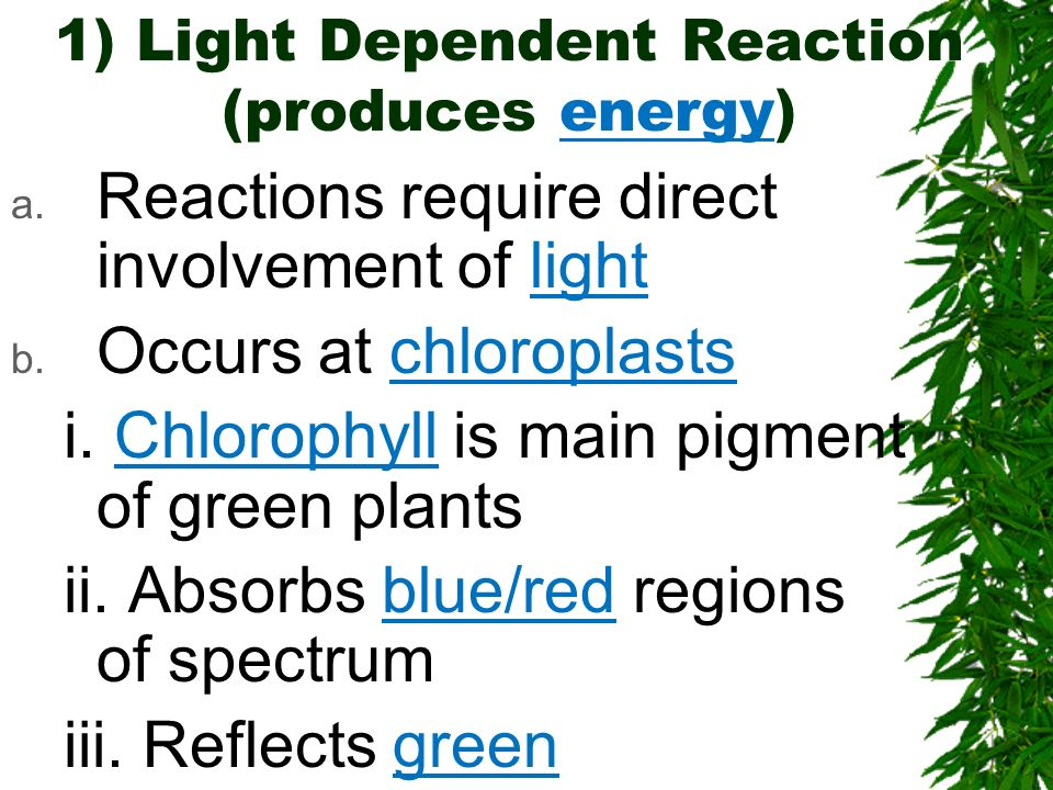 1) Light Dependent Reaction (produces energy)