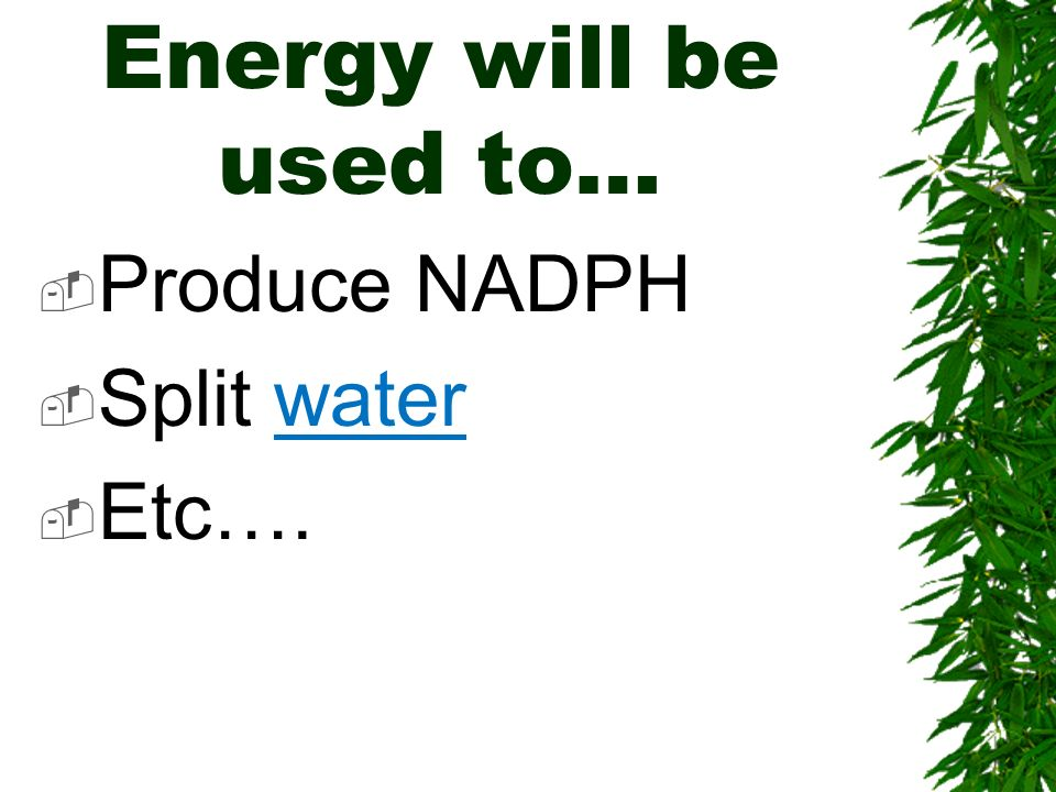 Energy will be used to… Produce NADPH Split water Etc….