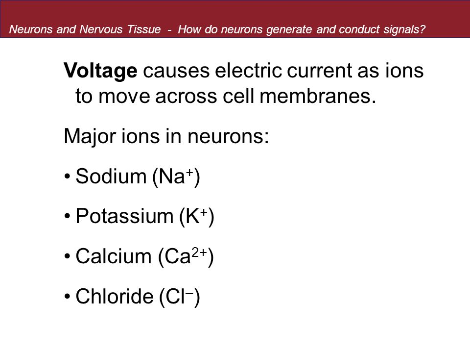 Voltage causes electric current as ions to move across cell membranes.