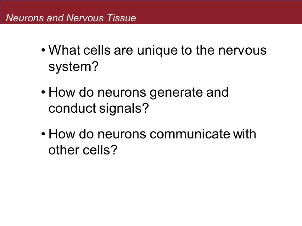 What cells are unique to the nervous system