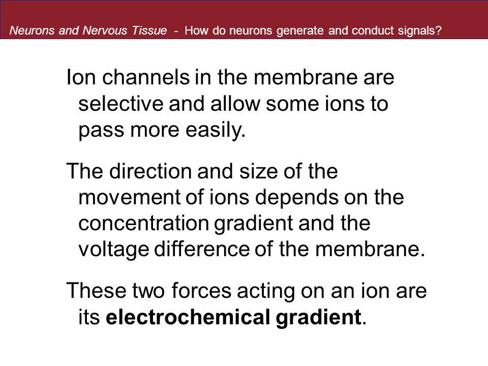 These two forces acting on an ion are its electrochemical gradient.