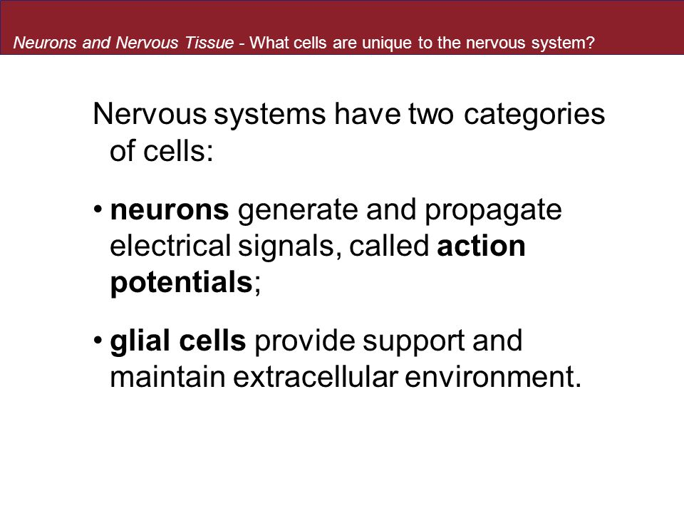 Nervous systems have two categories of cells: