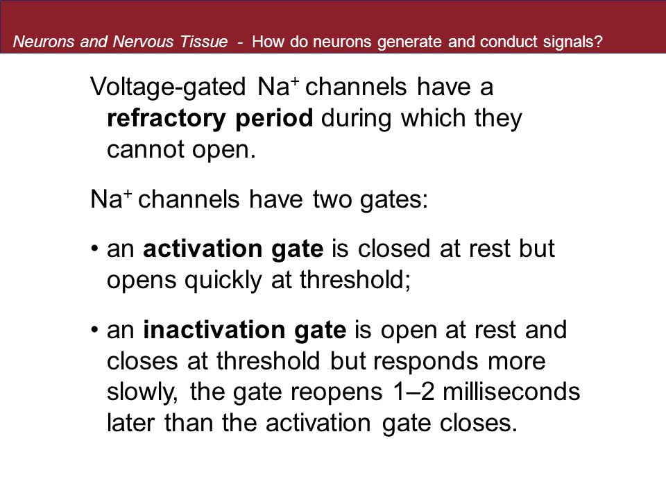 Na+ channels have two gates: