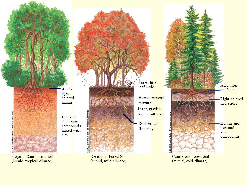 Forest litter leaf mold. Acid litter. and humus. Acidic. light- colored. humus. Humus-mineral.