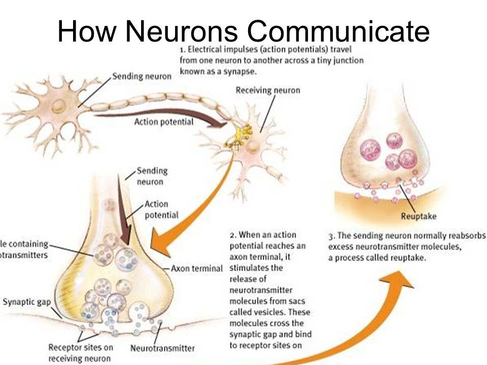 neuron to neuron communication