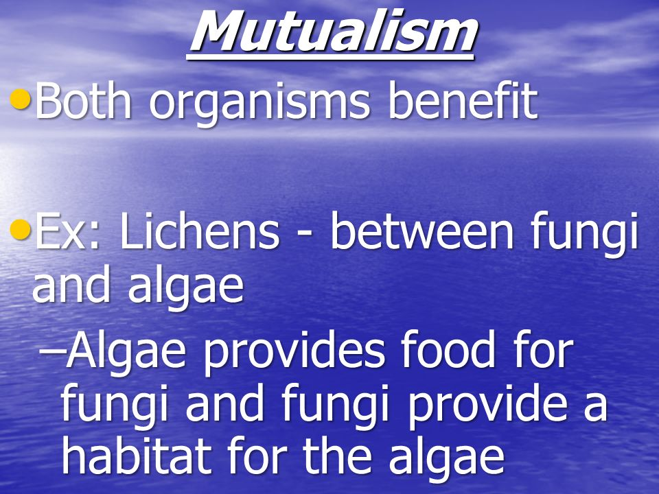 Mutualism Both organisms benefit Ex: Lichens - between fungi and algae