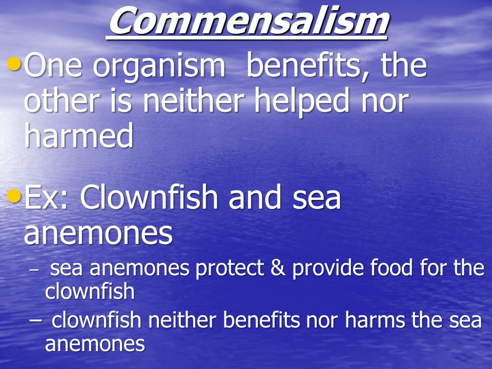 Commensalism One organism benefits, the other is neither helped nor harmed. Ex: Clownfish and sea anemones.