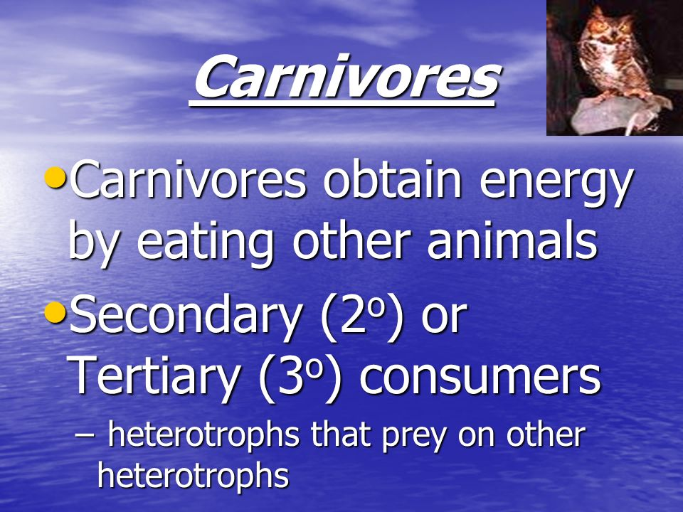 Carnivores Carnivores obtain energy by eating other animals