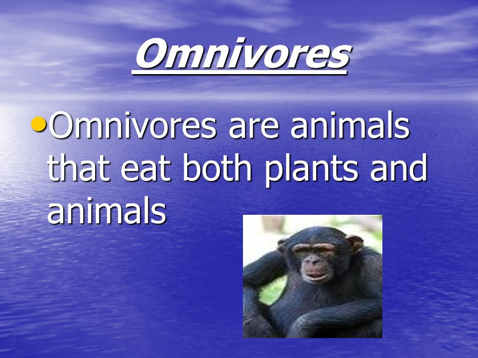 Omnivores Omnivores are animals that eat both plants and animals