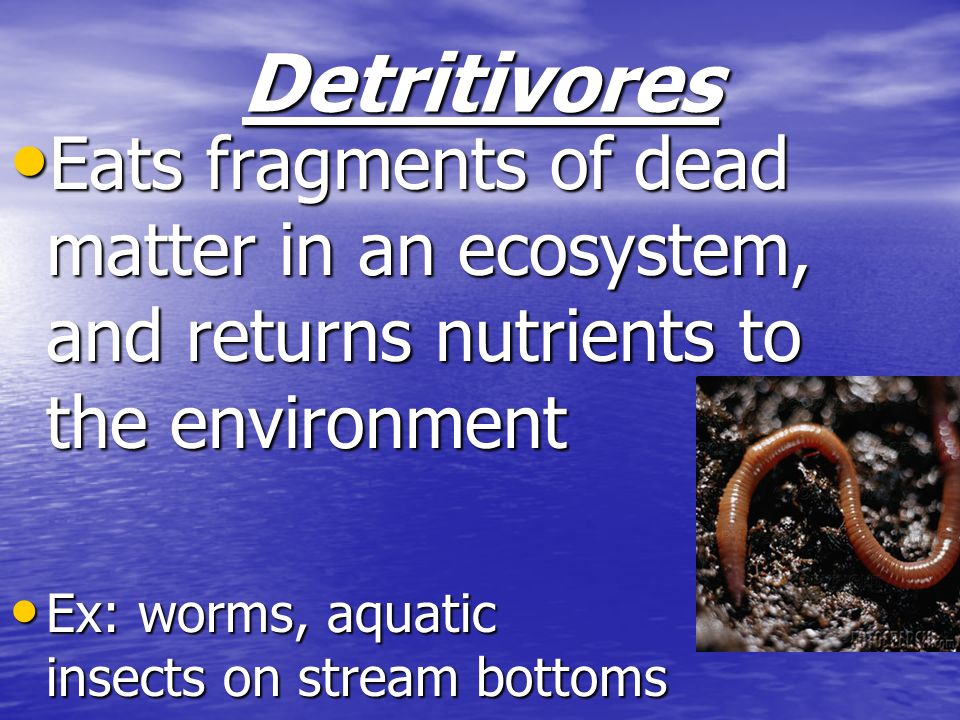 Detritivores Eats fragments of dead matter in an ecosystem, and returns nutrients to the environment.