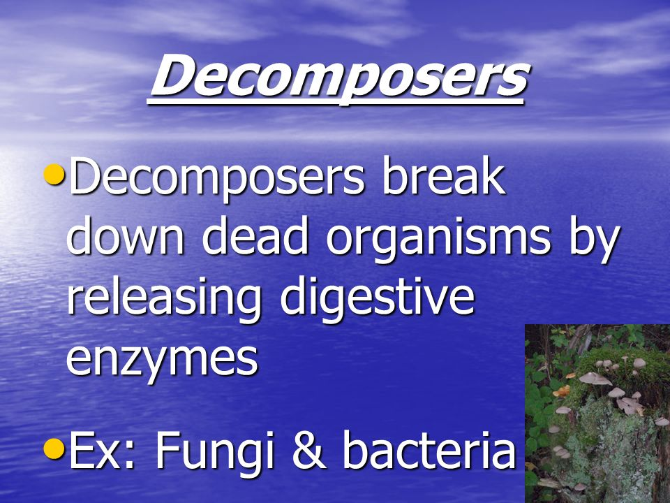 Decomposers Decomposers break down dead organisms by releasing digestive enzymes.
