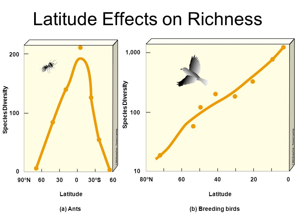 Latitude Effects on Richness