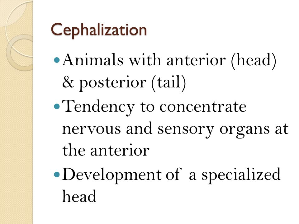 Animals with anterior (head) & posterior (tail)
