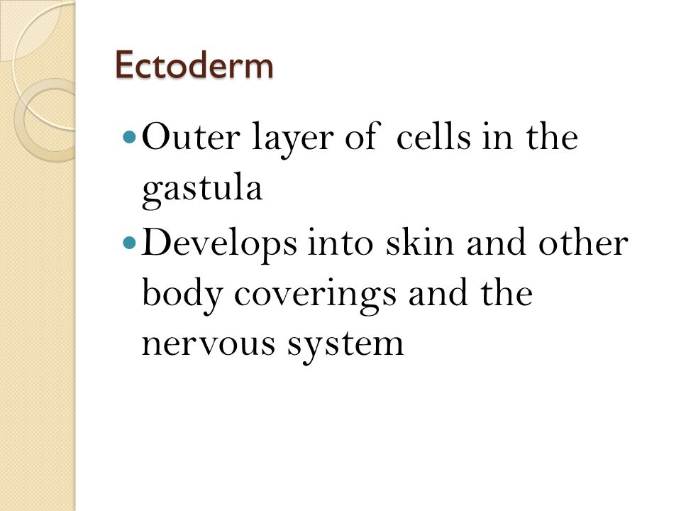 Outer layer of cells in the gastula