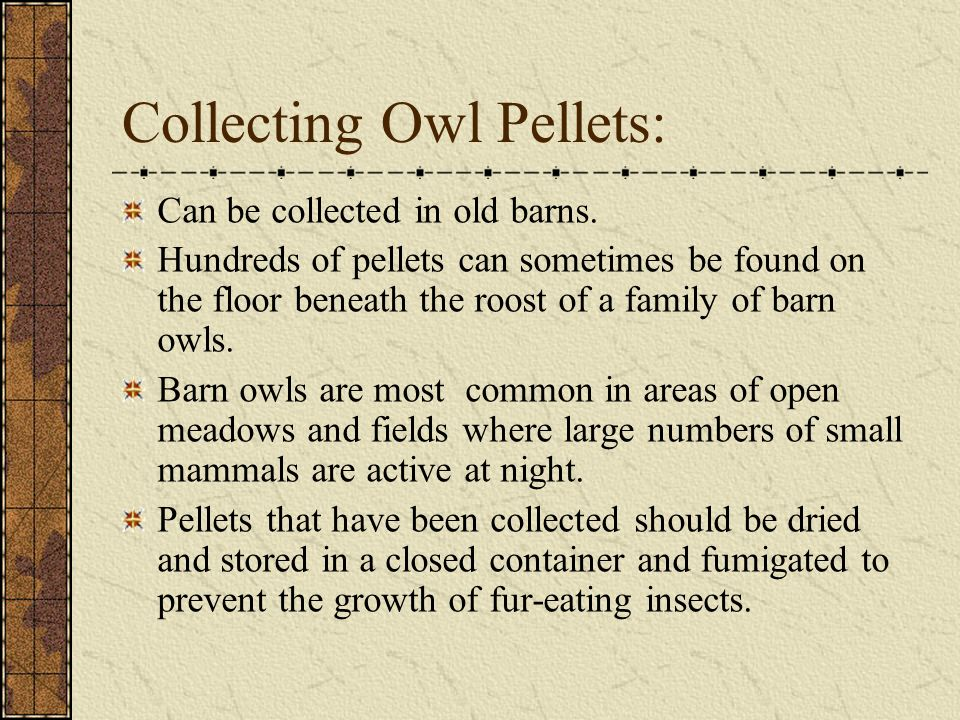 Collecting Owl Pellets: