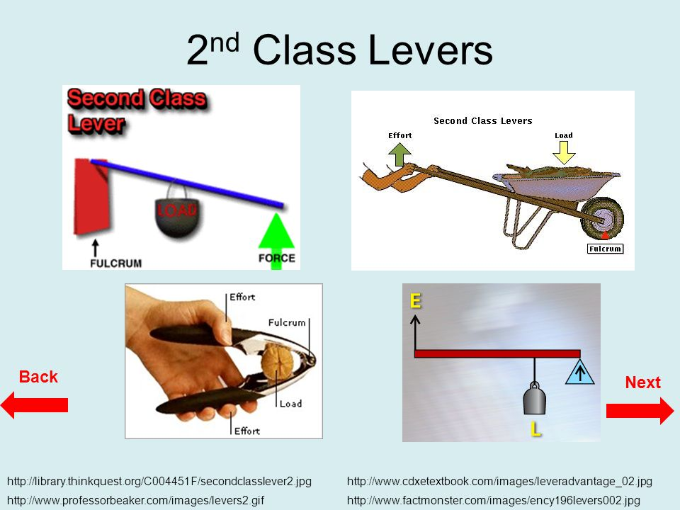 Funky 2nd Class Lever Image Anatomy And Physiology Biology Images