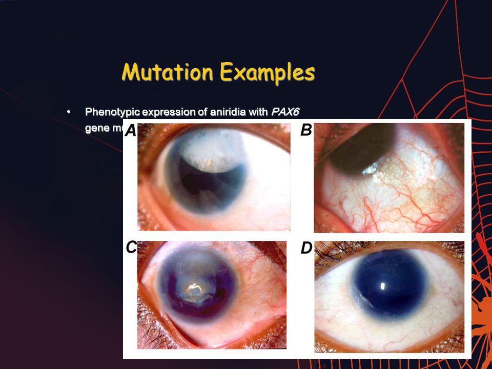 Mutations Ppt Video Online Download